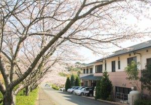 玄関前の桜並木